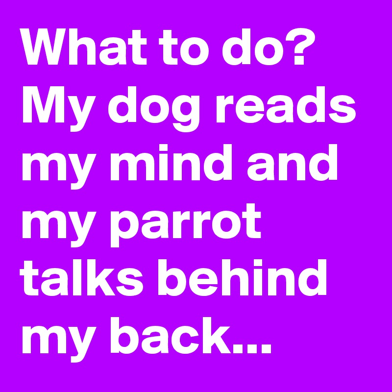 What to do? My dog reads my mind and my parrot talks behind my back...