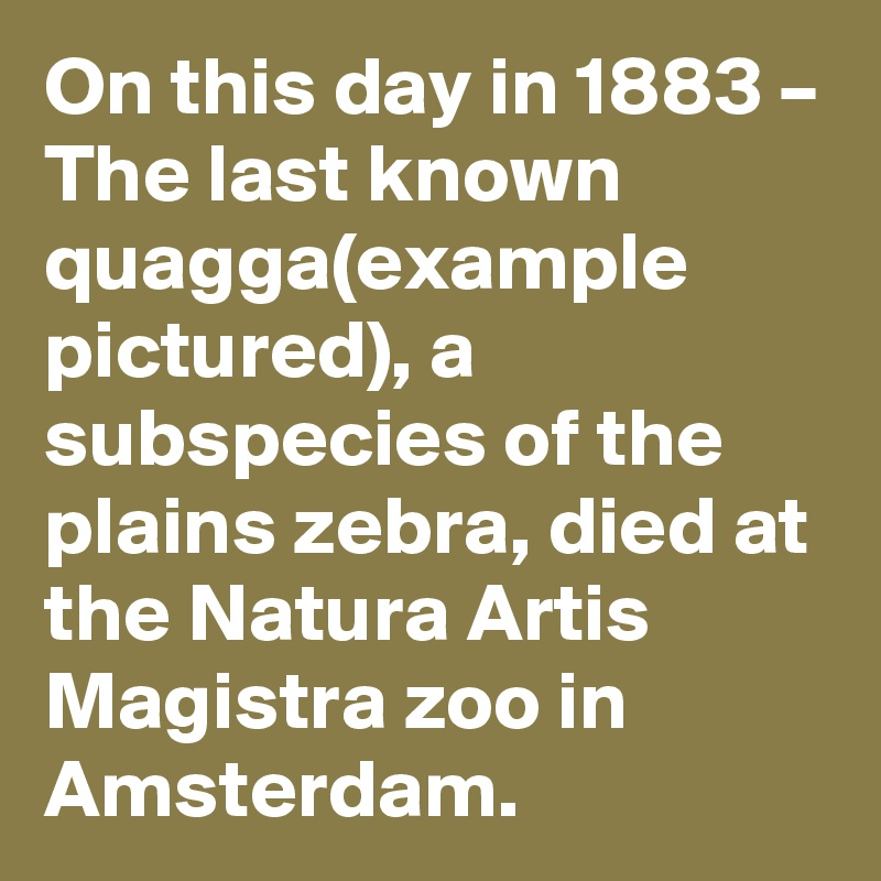 On this day in 1883 – The last known quagga(example pictured