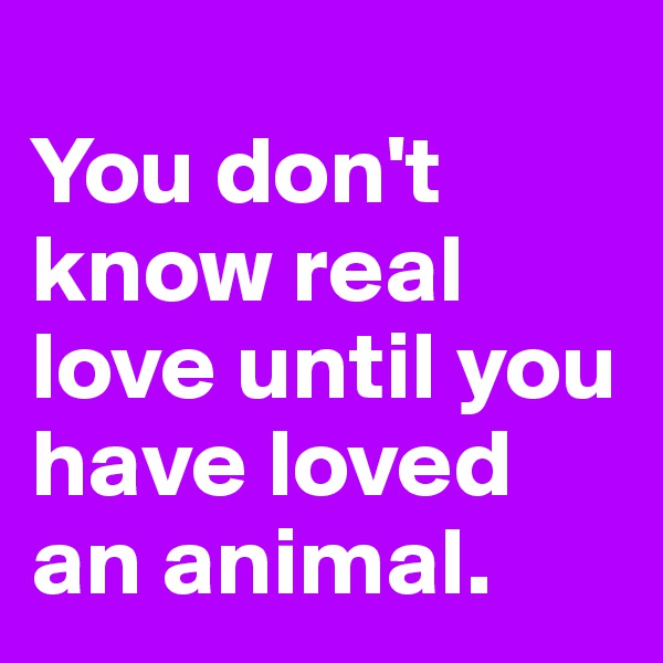 You don't know real love until you have loved an animal.