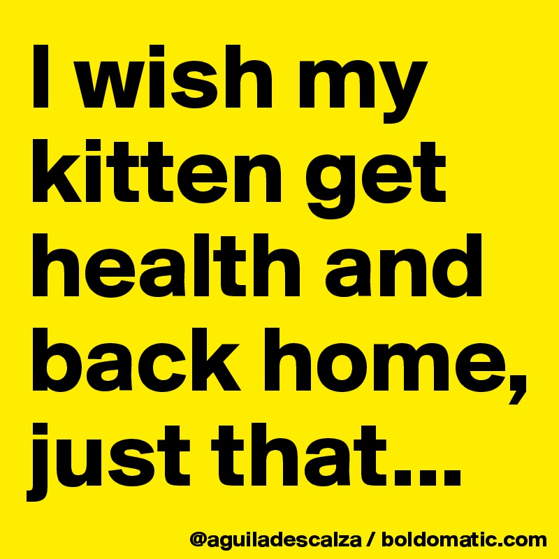 I wish my kitten get health and back home, just that...