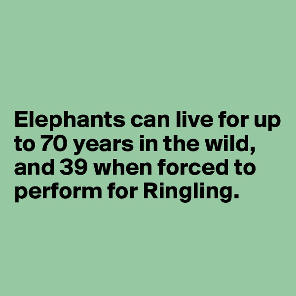 Elephants can live for up to 70 years in the wild, and 39 when forced to perform for Ringling.