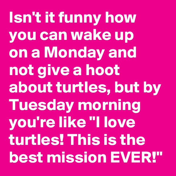 """Isn't it funny how you can wake up  on a Monday and not give a hoot about turtles, but by Tuesday morning you're like """"I love turtles! This is the best mission EVER!"""""""