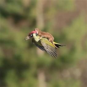 littleape on Boldomatic - butter! fly!
