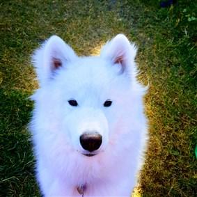 HappyDog on Boldomatic -