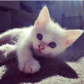 Cat-like on Boldomatic -