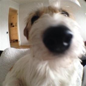 Chilidog on Boldomatic - beersnowcoffeedogsatanicbicycleswedishfishsnowboardnorthernsweden